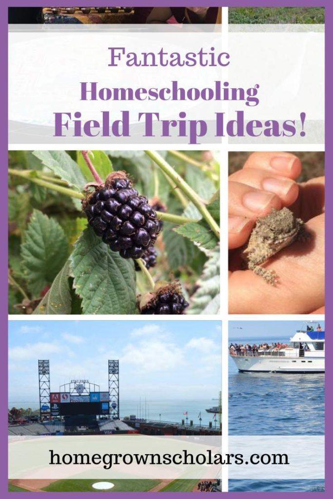 Fantastic Homeschooling Field Trip Ideas!